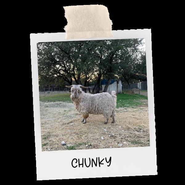 photo of java chunk