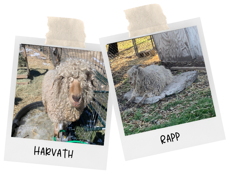 photo of harvath and rapp