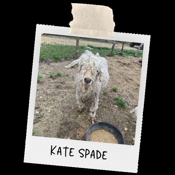 photo of Kate spade Angora goat