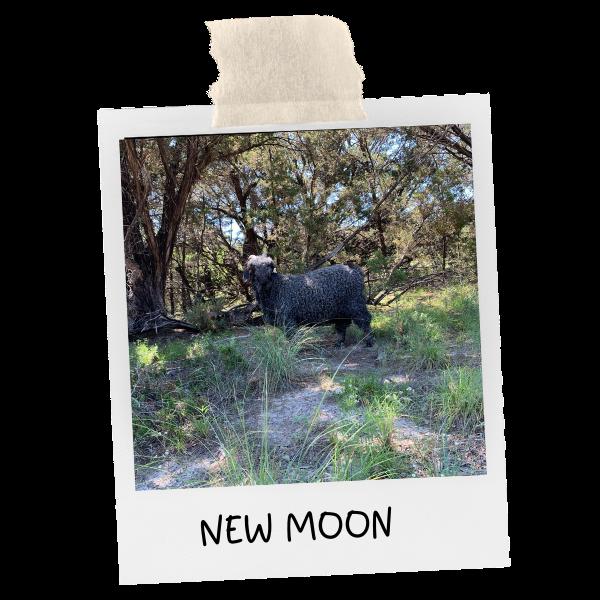 photo of new moon