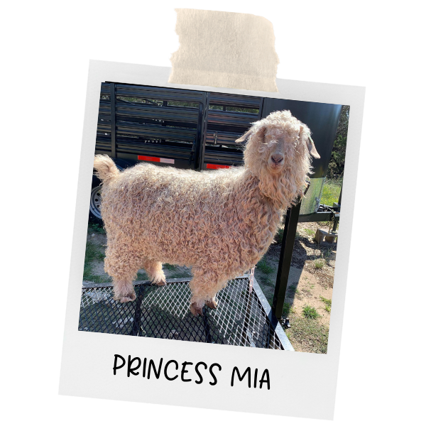 photo of princess Mia